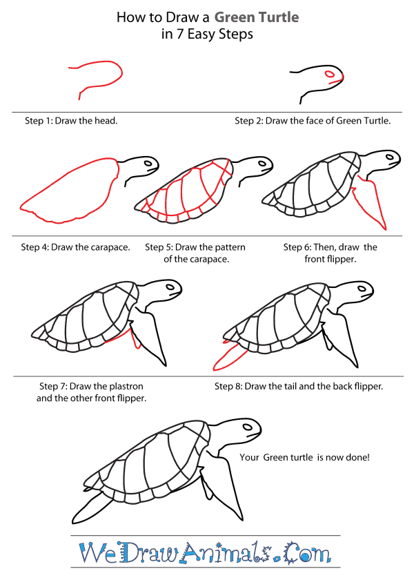 How to Draw a Green Turtle - Step-By-Step Tutorial