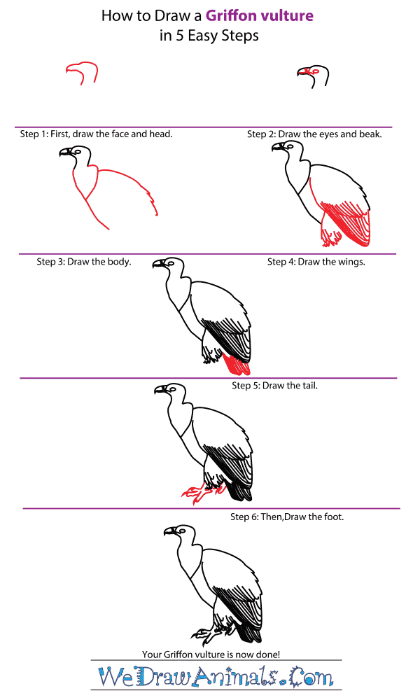 How to Draw a Griffon Vulture - Step-by-Step Tutorial