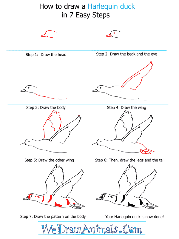 How to Draw a Harlequin Duck - Step-by-Step Tutorial