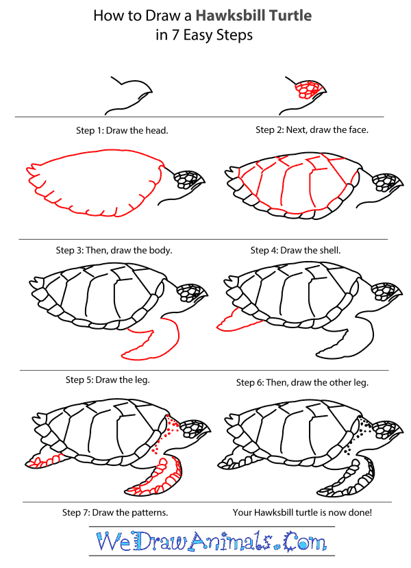 How to Draw a Hawksbill Turtle - Step-by-Step Tutorial