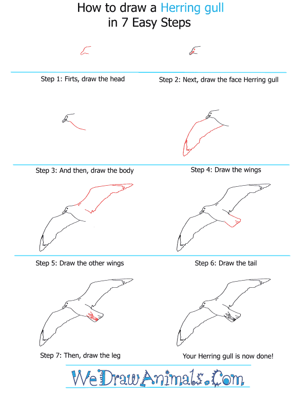 How to Draw a Herring Gull - Step-by-Step Tutorial