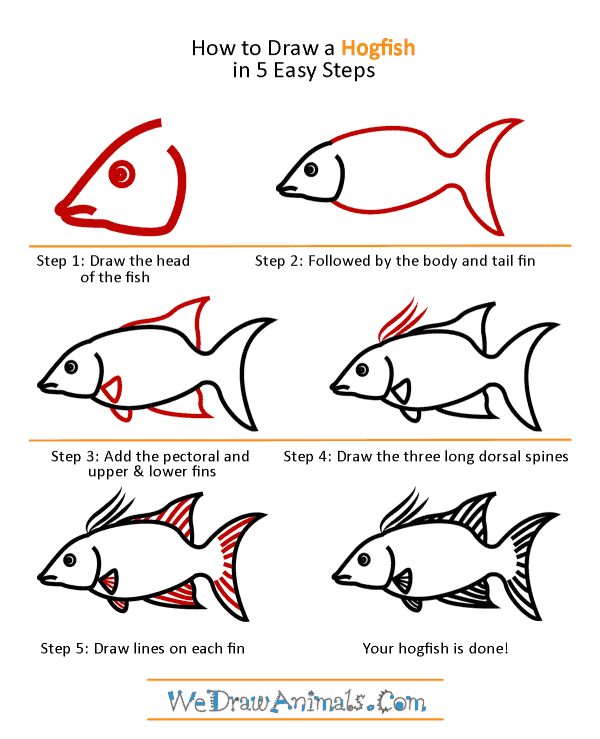 How to Draw a Hogfish - Step-by-Step Tutorial
