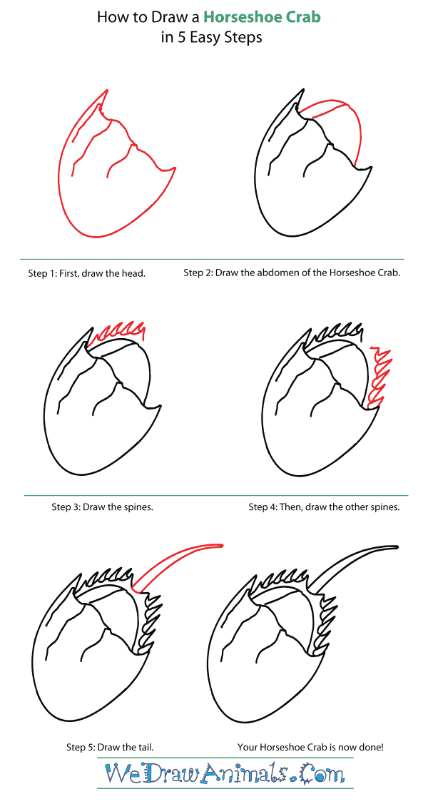 How to Draw a Horseshoe Crab - Step-By-Step Tutorial