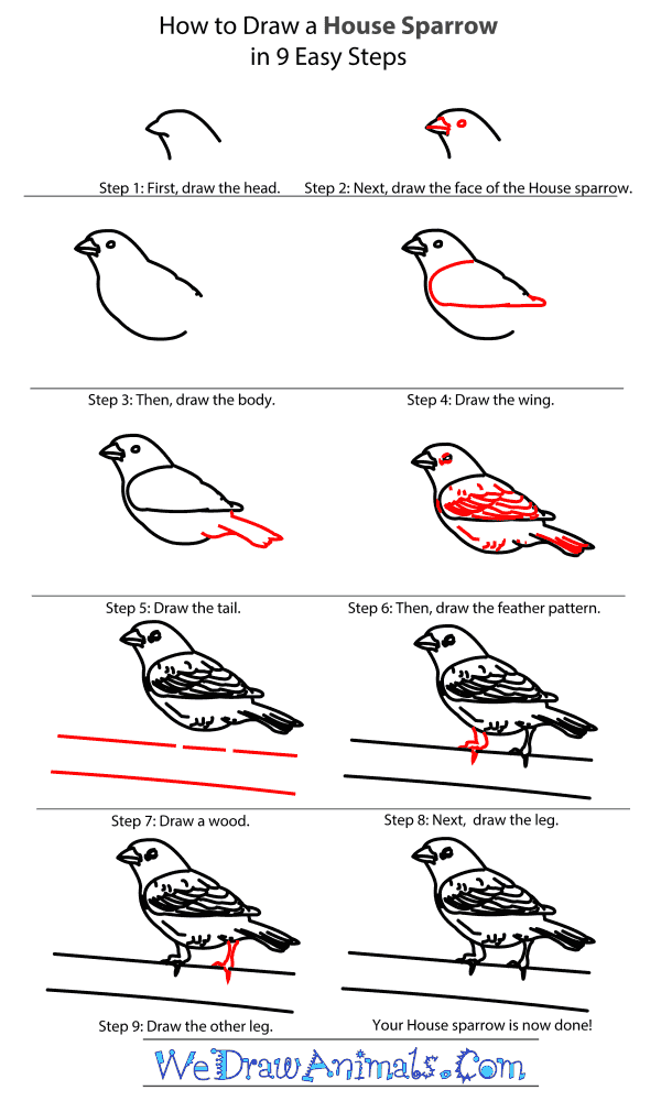 How to Draw a House Sparrow - Step-By-Step Tutorial