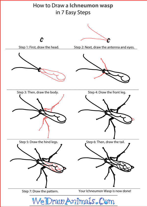 How to Draw an Ichneumon Wasp - Step-by-Step Tutorial