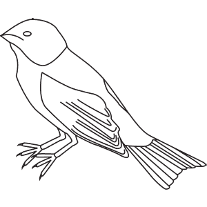How To Draw an Indigo Bunting - Step-By-Step Tutorial