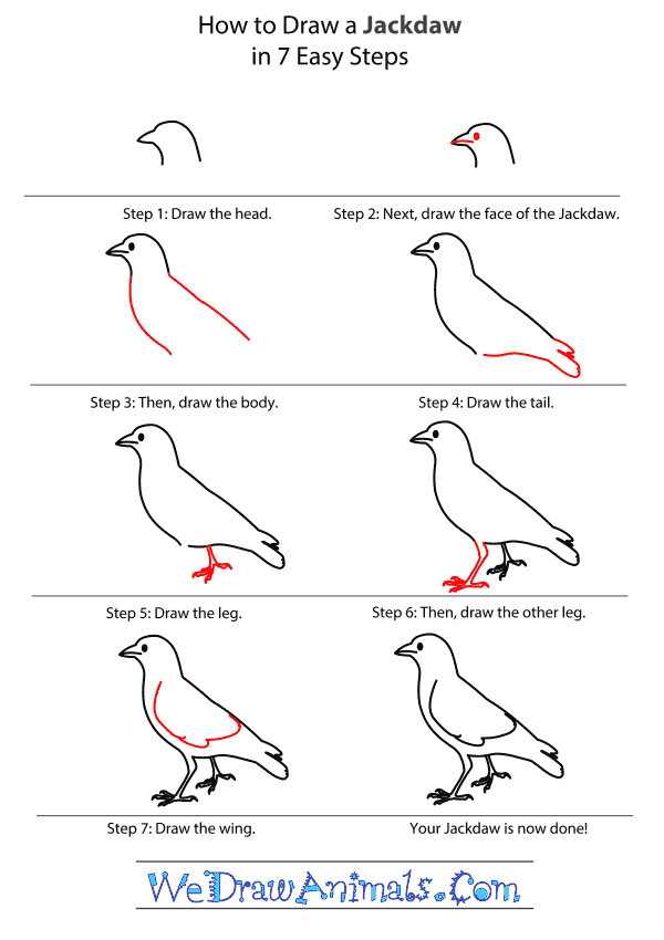 How to Draw a Jackdaw - Step-By-Step Tutorial