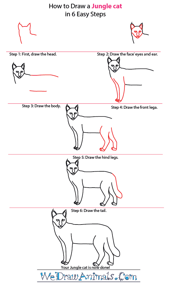 How to Draw a Jungle Cat - Step-by-Step Tutorial