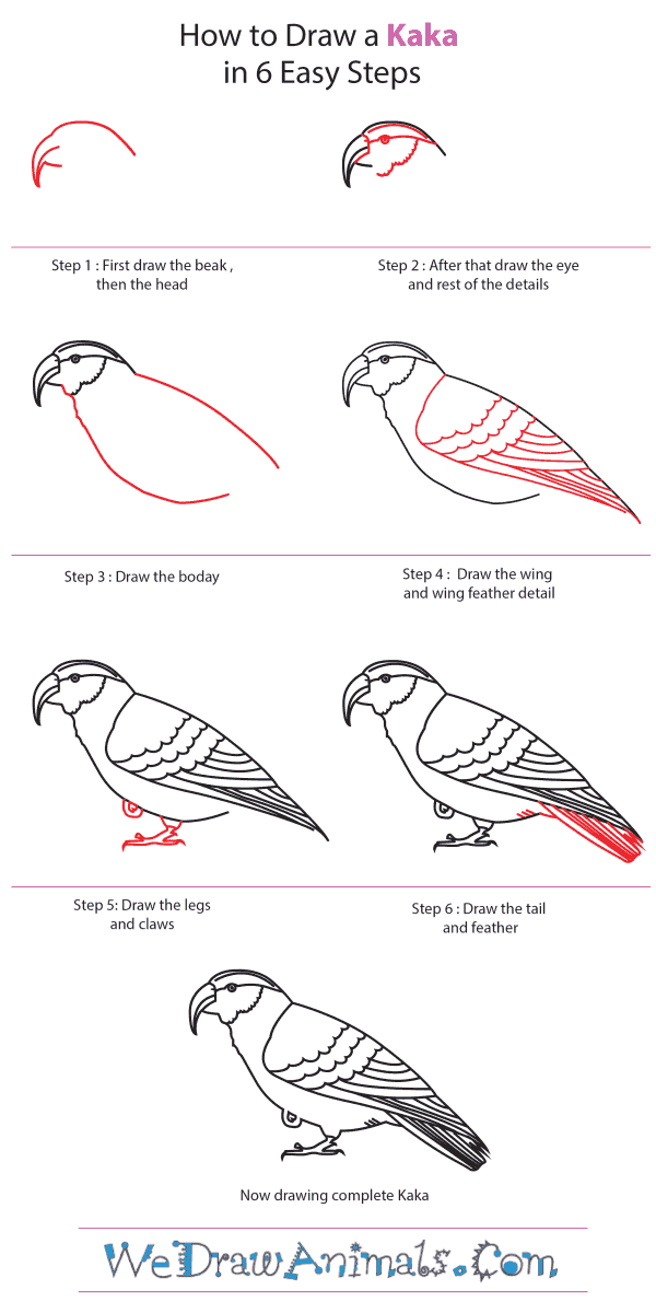 How to Draw a Kaka - Step-By-Step Tutorial