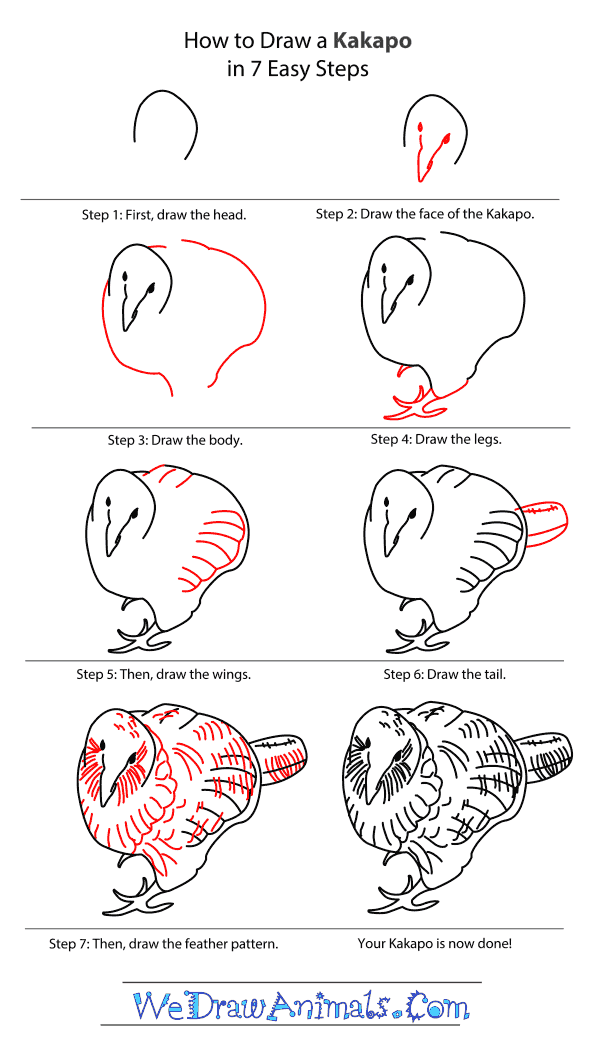 How to Draw a Kakapo - Step-By-Step Tutorial