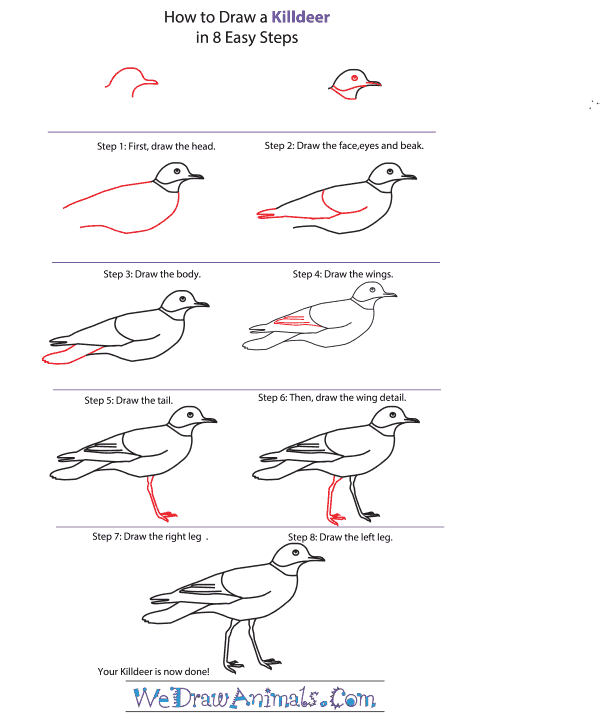 How to Draw a Killdeer - Step-By-Step Tutorial