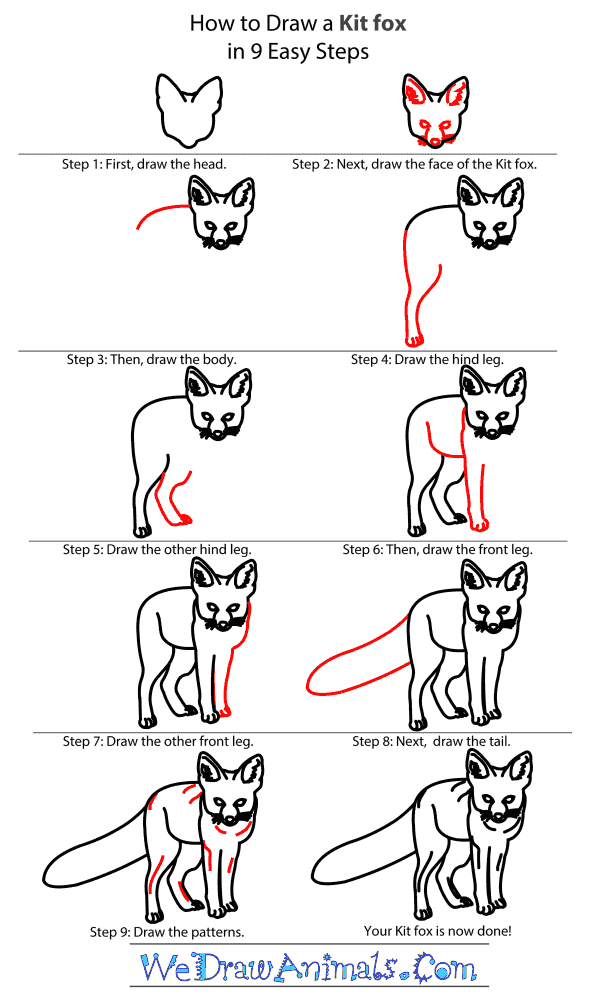How to Draw a Kit Fox - Step-by-Step Tutorial