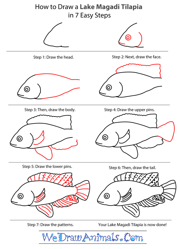 How to Draw a Lake Magadi Tilapia - Step-by-Step Tutorial