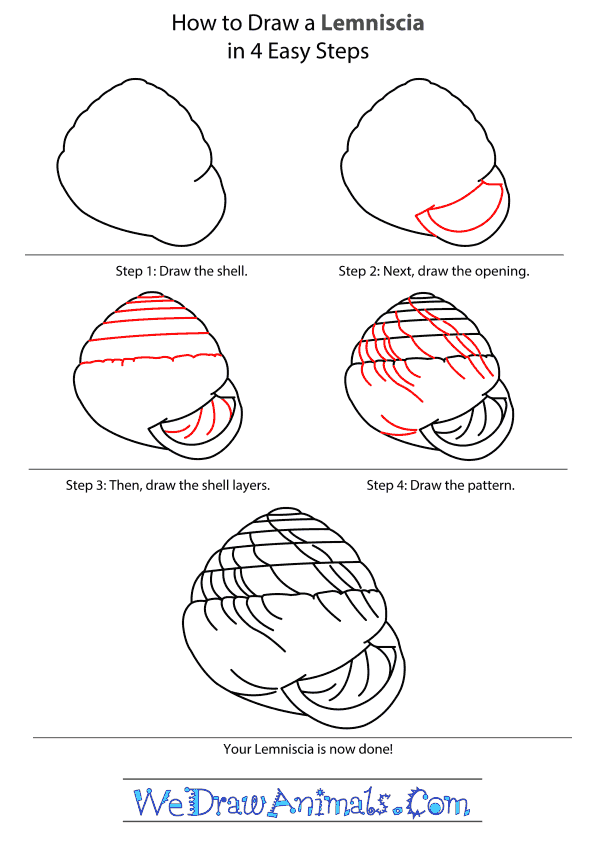 How to Draw a Lemniscia - Step-By-Step Tutorial