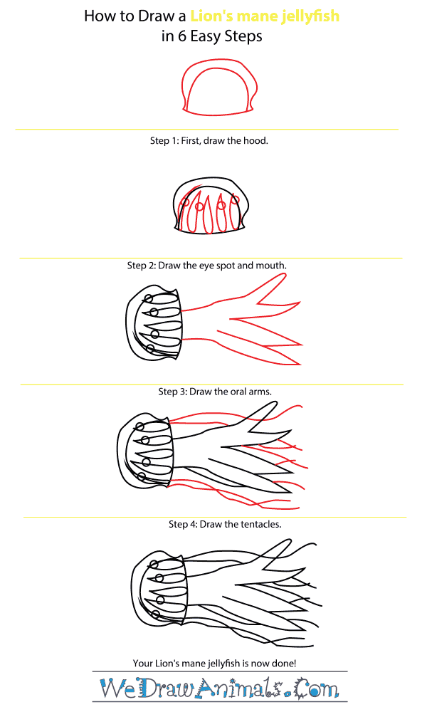 how to draw a lions mane jellyfish step by step tutorial