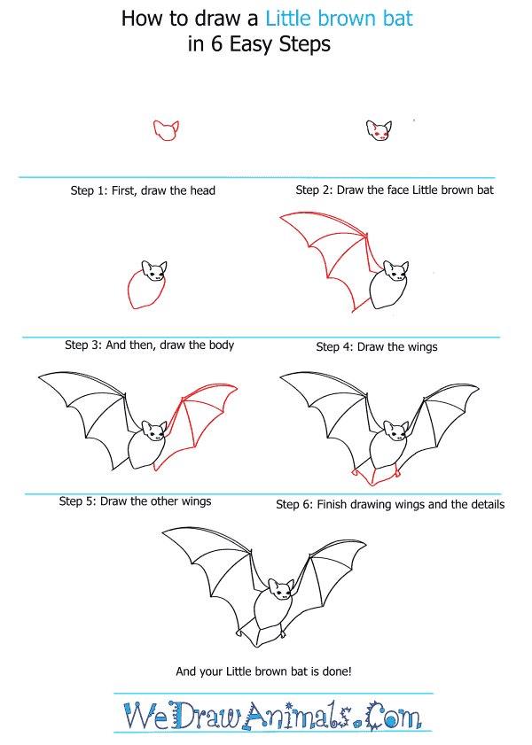 How to Draw a Little Brown Bat - Step-by-Step Tutorial