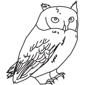 How To Draw a Little Owl - Step-By-Step Tutorial
