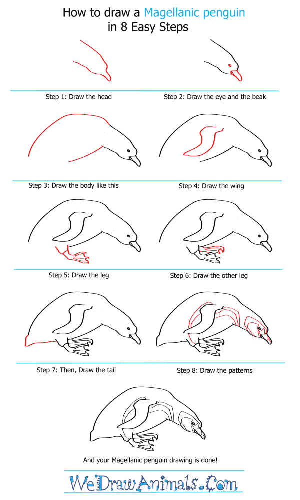 How to Draw a Magellanic Penguin - Step-by-Step Tutorial