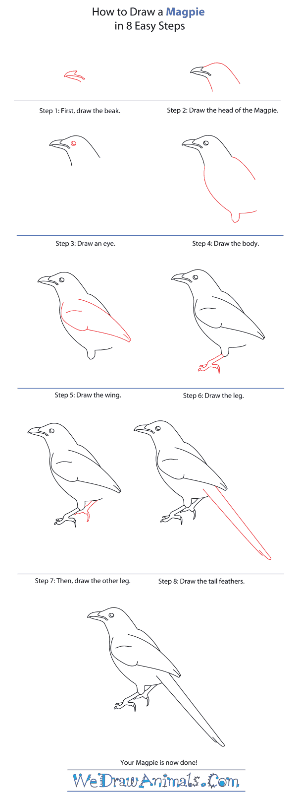 How to Draw a Magpie - Step-By-Step Tutorial