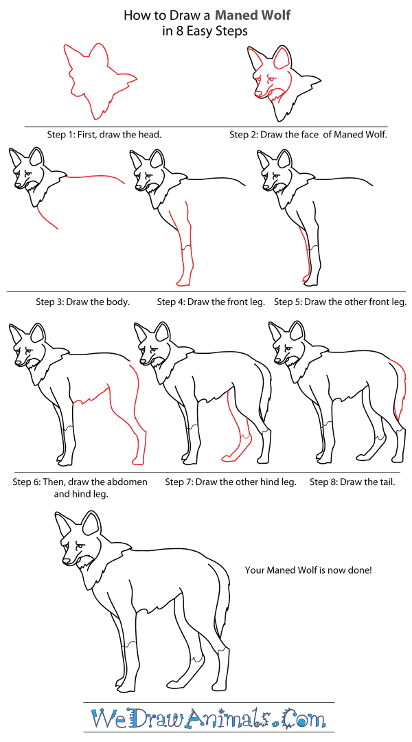 How to draw a maned wolf step by step tutorial
