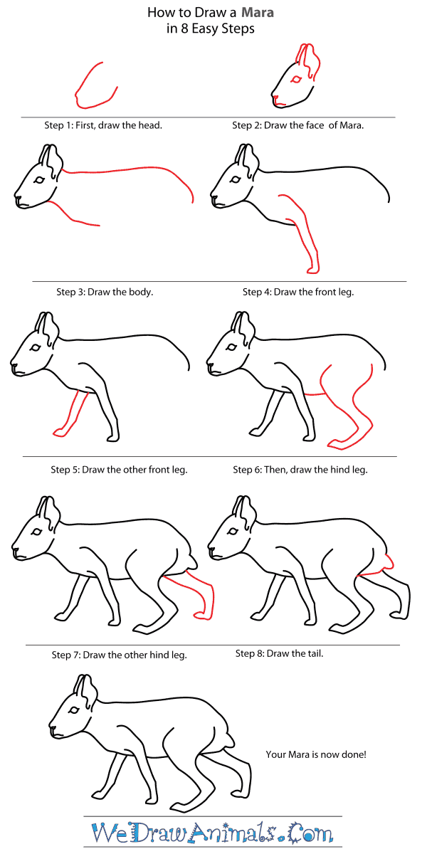 How to Draw a Mara - Step-By-Step Tutorial