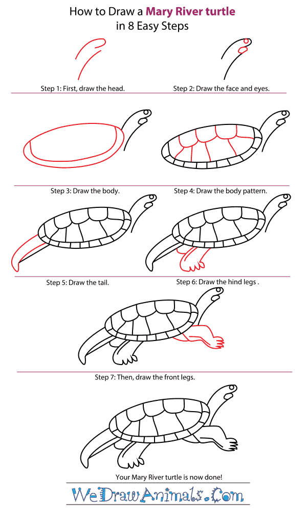 How to Draw a Mary River Turtle