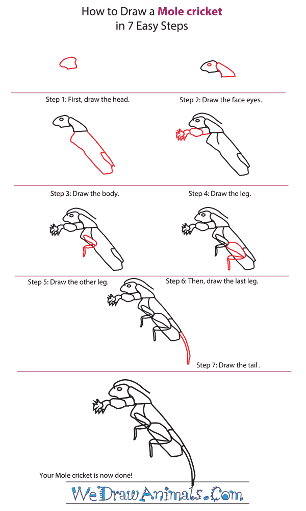 How to Draw a Mole Cricket - Step-By-Step Tutorial