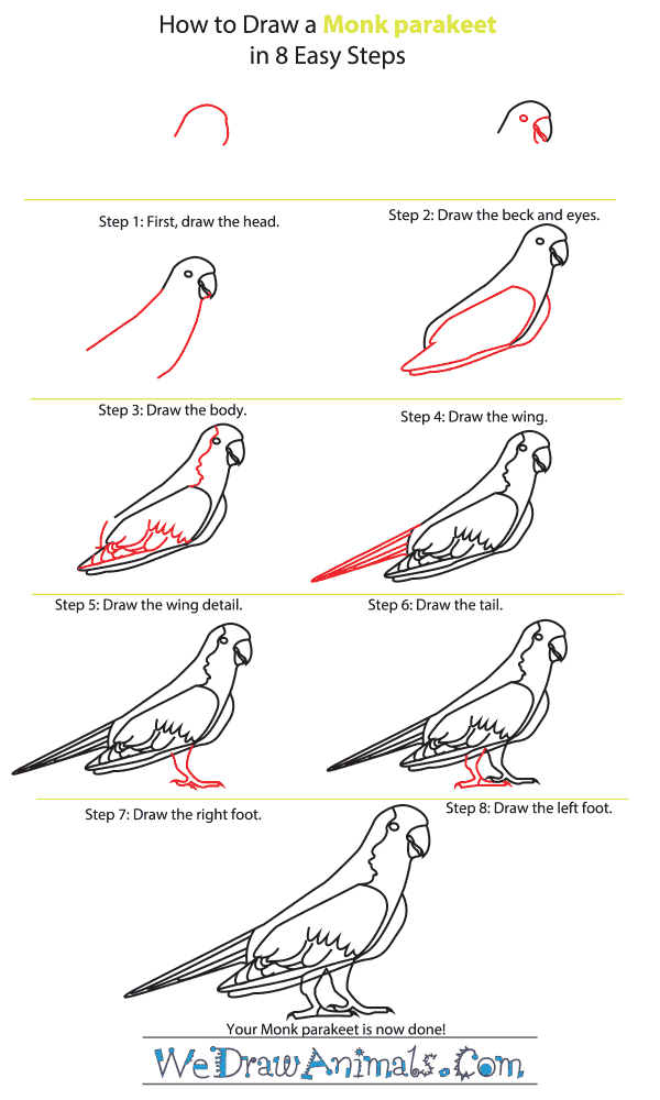How to Draw a Monk Parakeet - Step-by-Step Tutorial