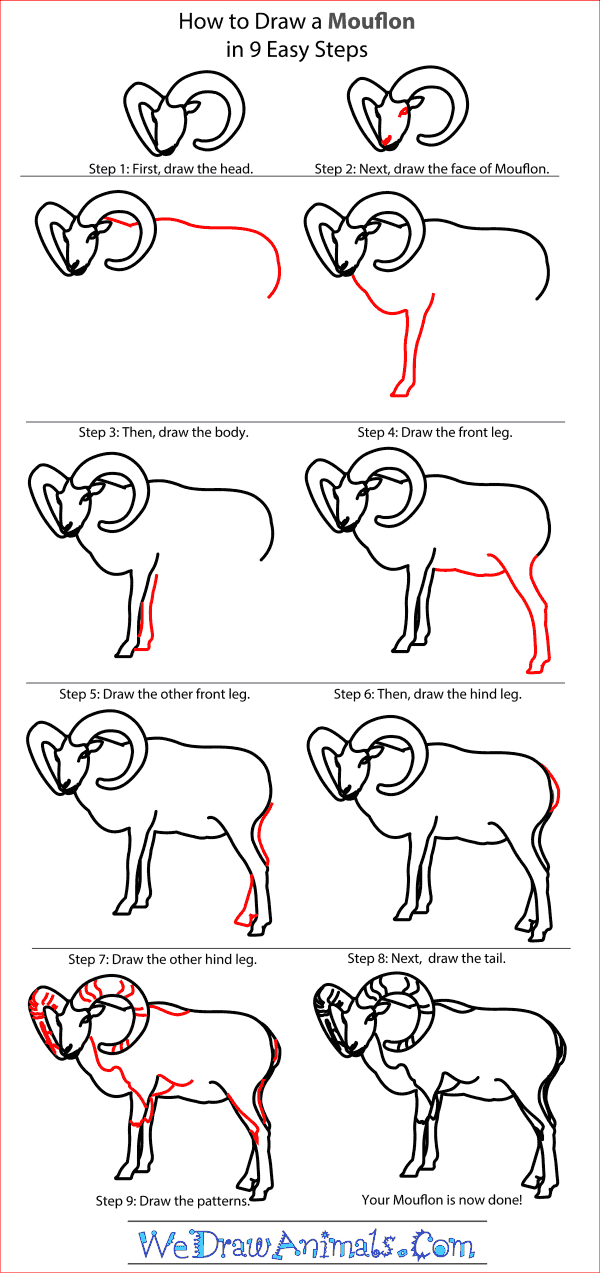 How to Draw a Mouflon - Step-by-Step Tutorial