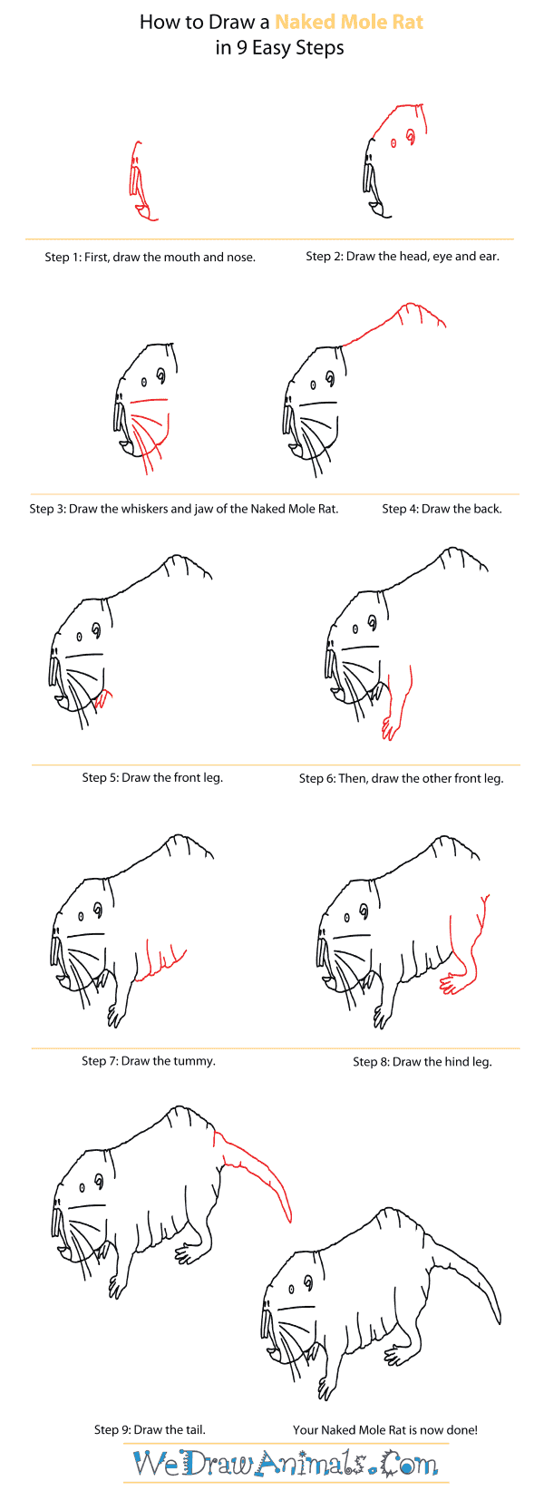 How to Draw a Naked Mole Rat - Step-By-Step Tutorial