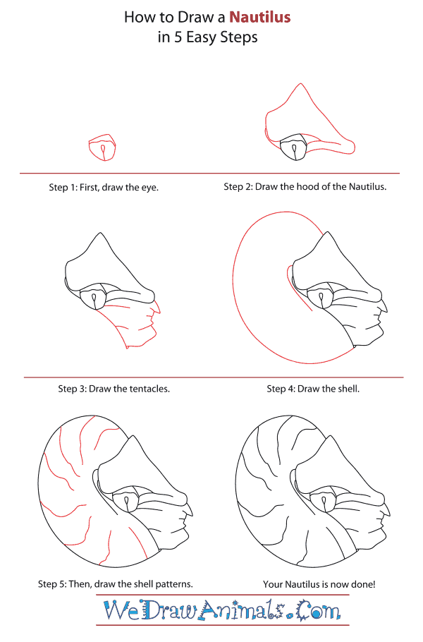 How to Draw a Nautilus - Step-By-Step Tutorial