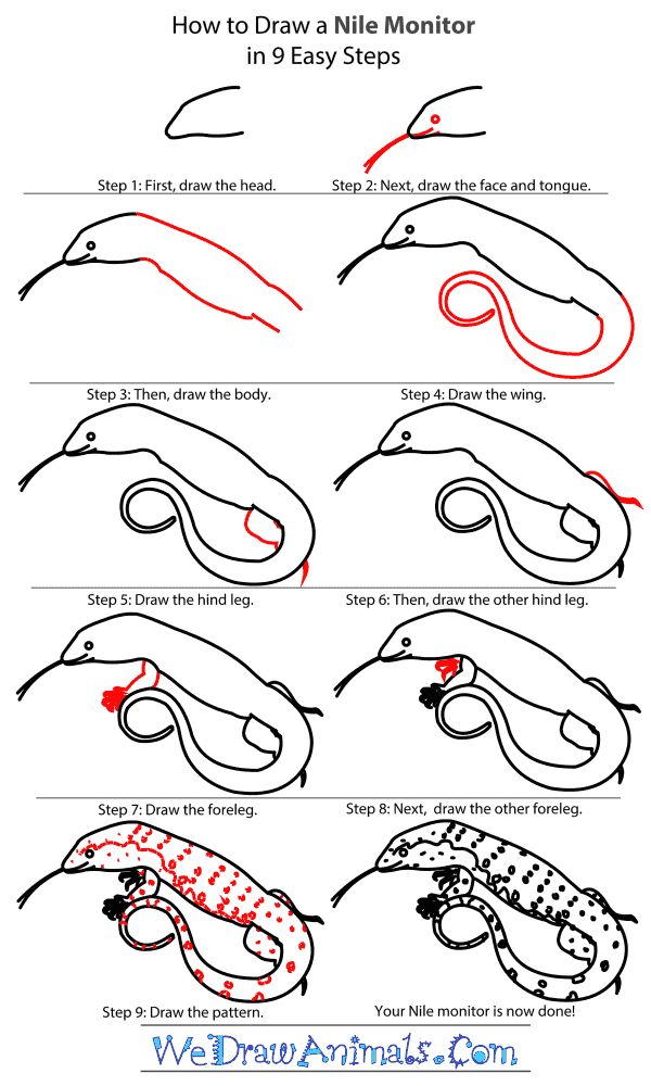 How to Draw a Nile Monitor - Step-by-Step Tutorial