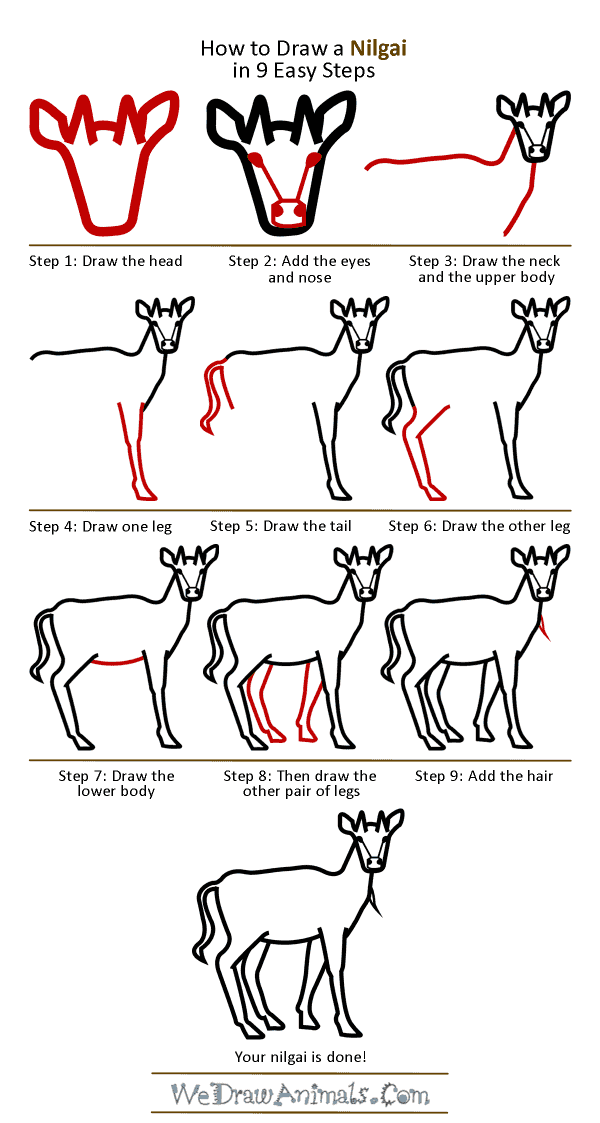 How to Draw a Nilgai - Step-by-Step Tutorial