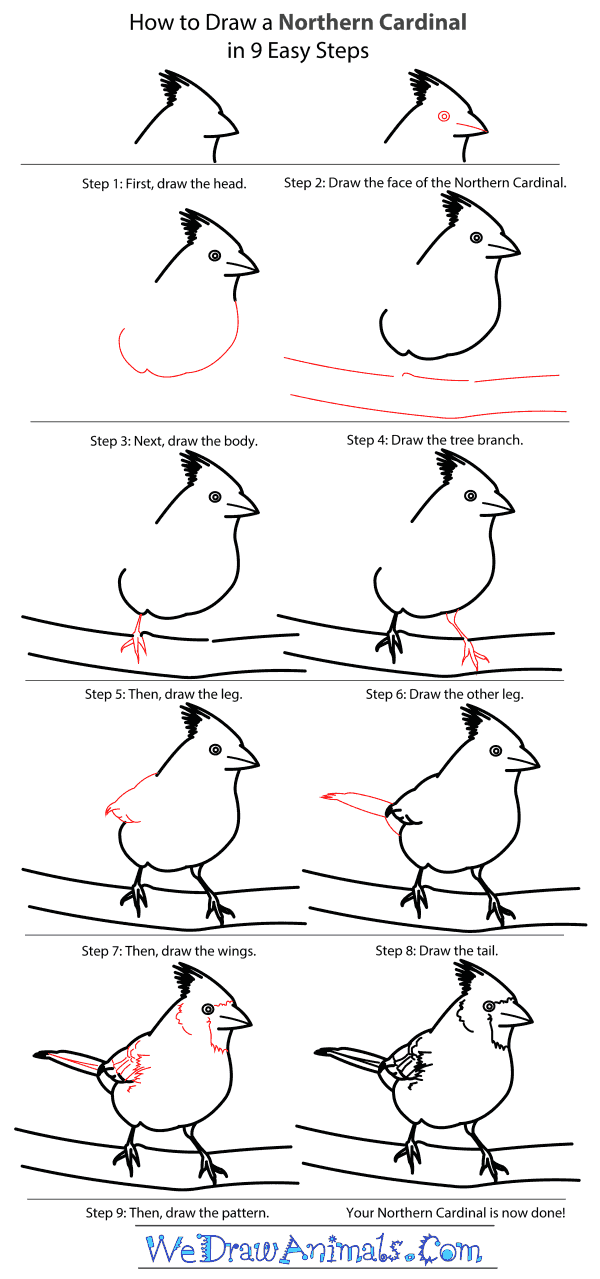 How to Draw a Northern Cardinal - Step-by-Step Tutorial
