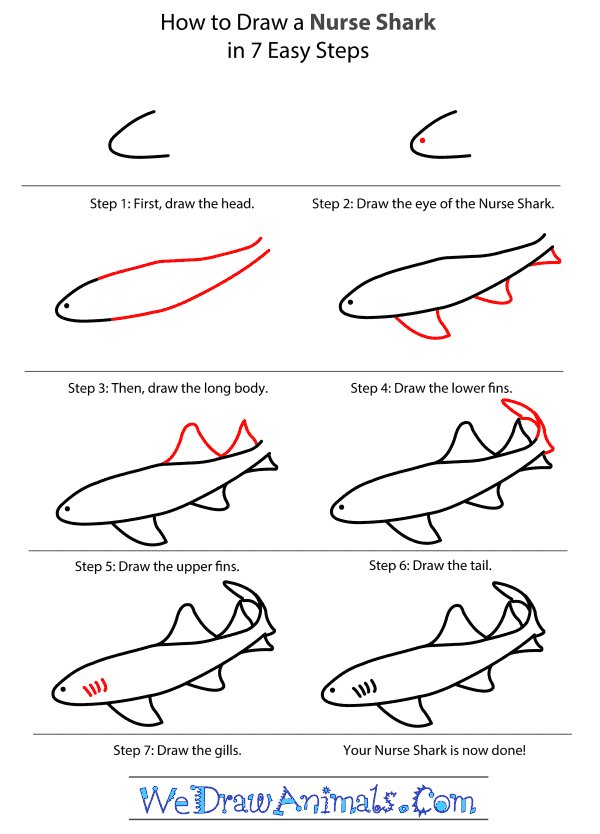 How to Draw a Nurse Shark - Step-By-Step Tutorial