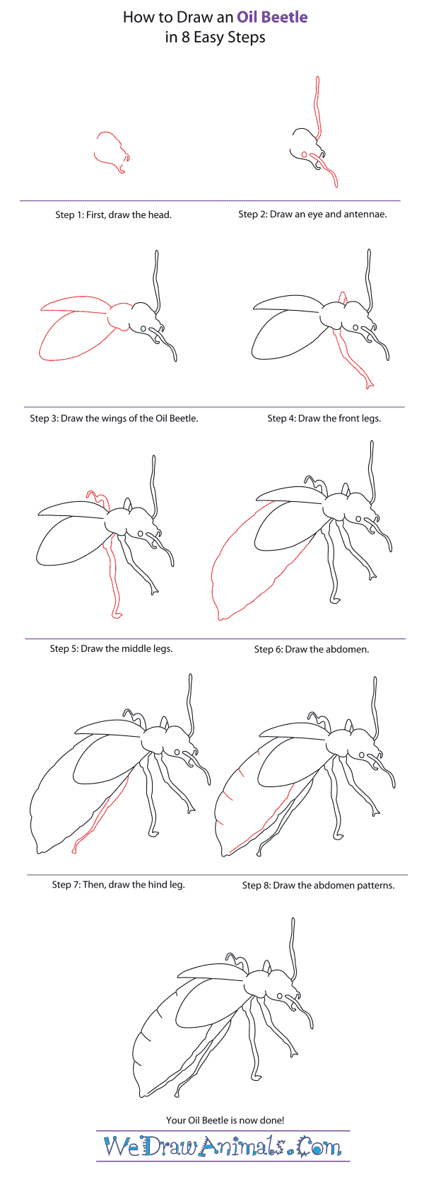 How to Draw an Oil Beetle - Step-By-Step Tutorial