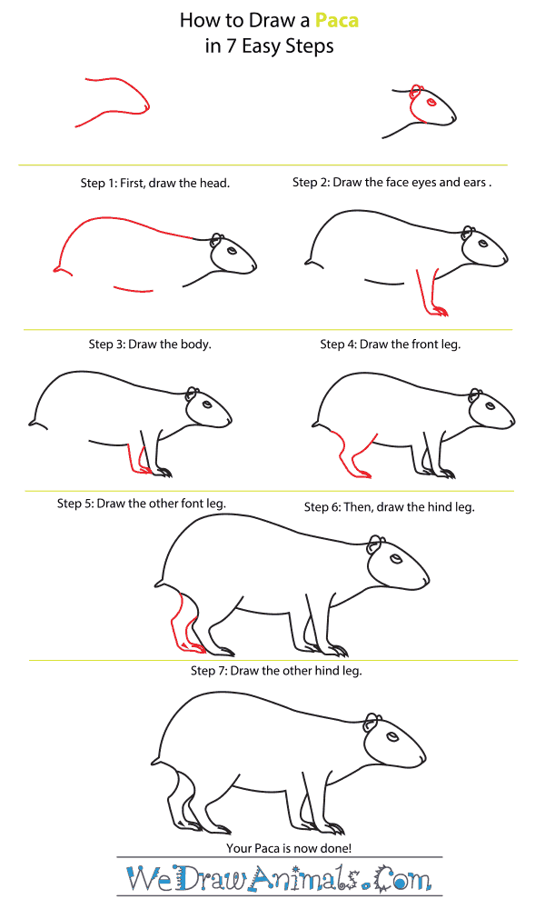 How to Draw a Paca - Step-by-Step Tutorial