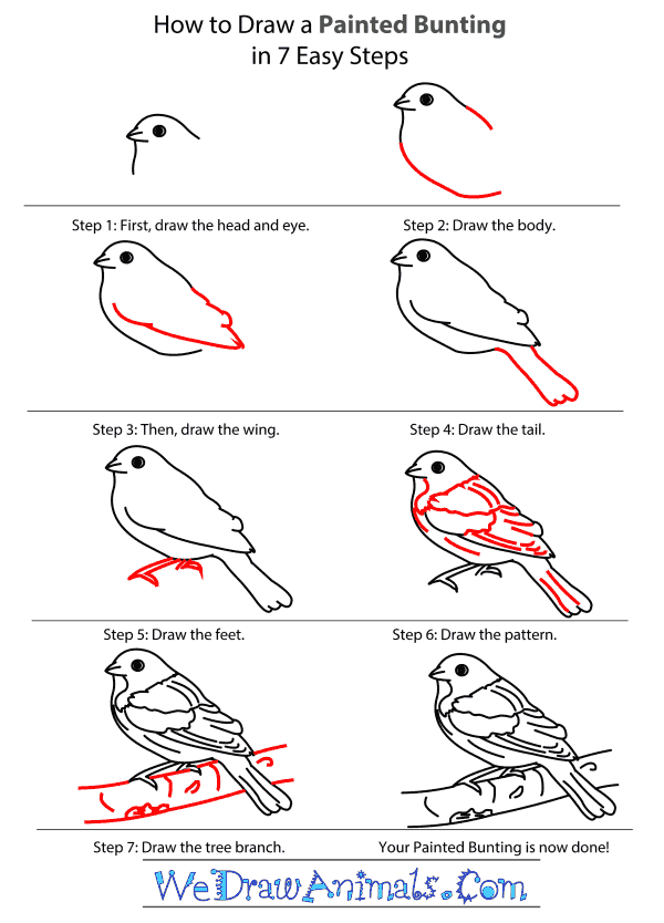 How to Draw a Painted Bunting - Step-by-Step Tutorial