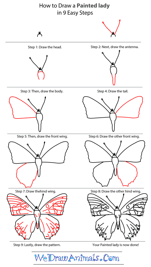 How to Draw a Painted Lady - Step-by-Step Tutorial