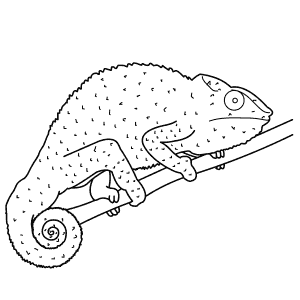 How To Draw a Panther Chameleon - Step-By-Step Tutorial