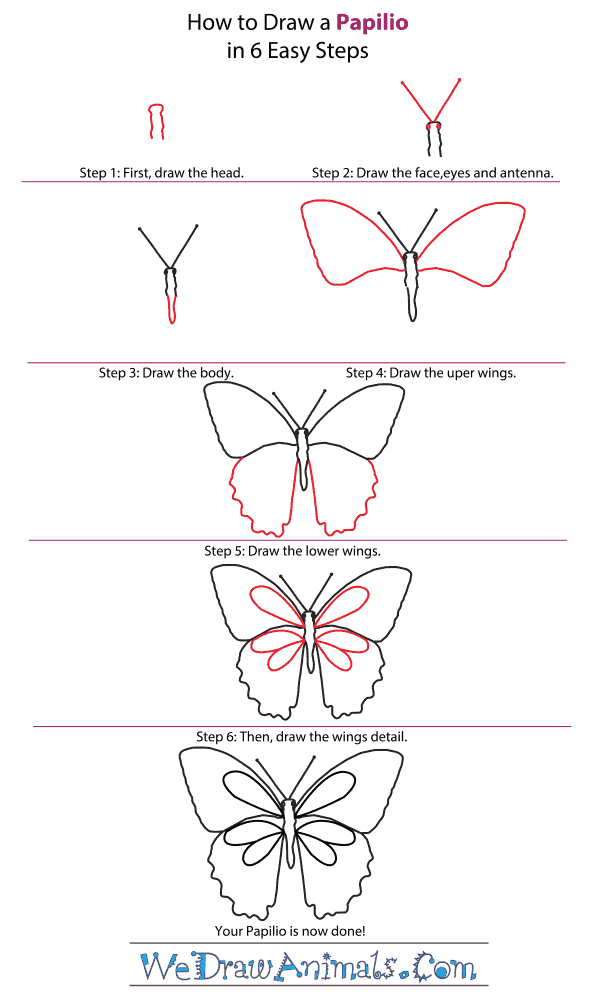 How to Draw a Papilio - Step-by-Step Tutorial