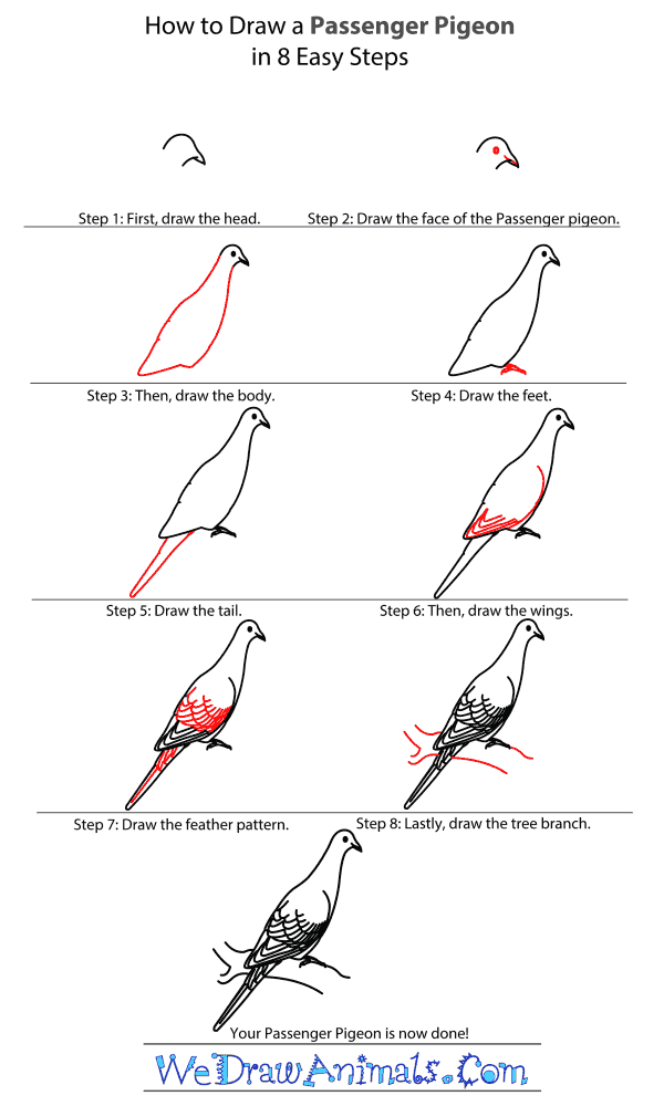How to Draw a Passenger Pigeon - Step-By-Step Tutorial