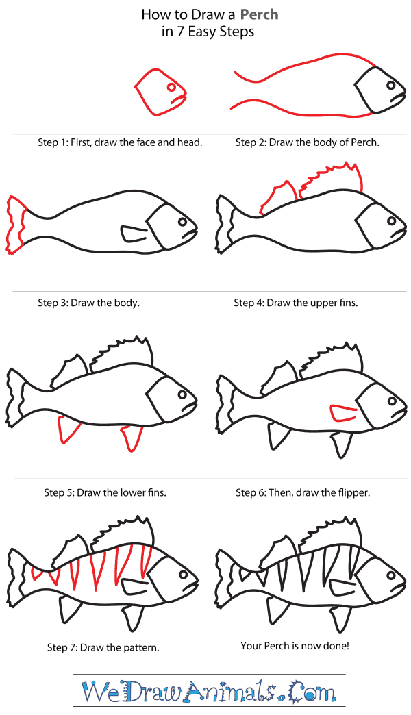 How to Draw a Perch - Step-By-Step Tutorial