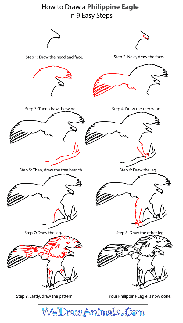 How to Draw a Philippine Eagle - Step-by-Step Tutorial