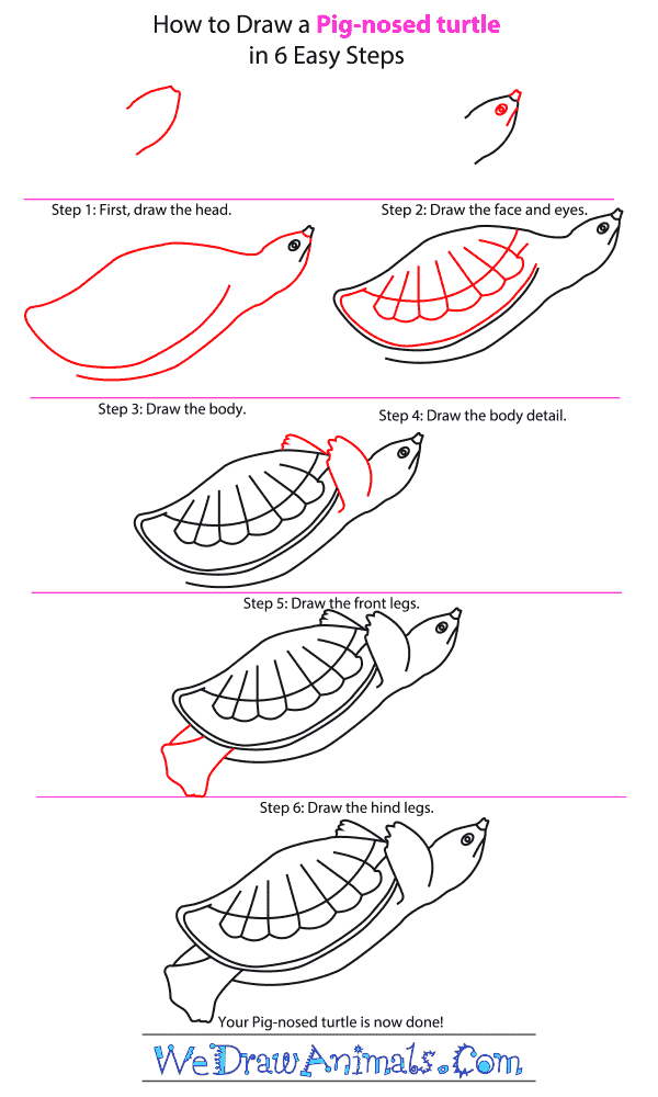 How to Draw a Pig-Nosed Turtle - Step-by-Step Tutorial