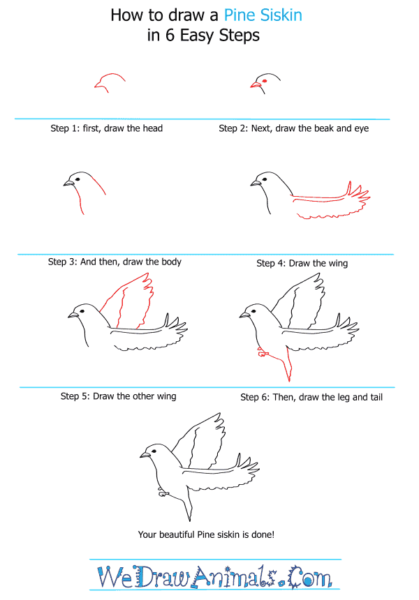 How to Draw a Pine Siskin - Step-by-Step Tutorial