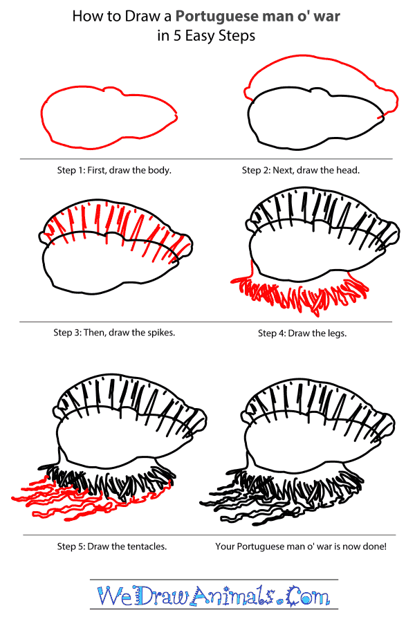 How to Draw a Portuguese Man O' War - Step-by-Step Tutorial