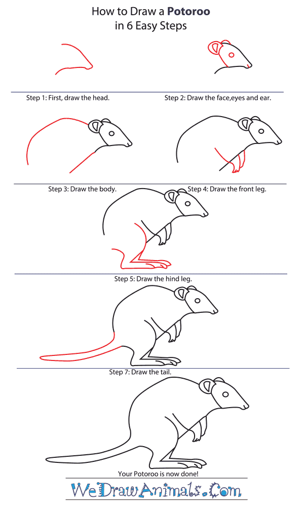 How to Draw a Potoroo - Step-by-Step Tutorial