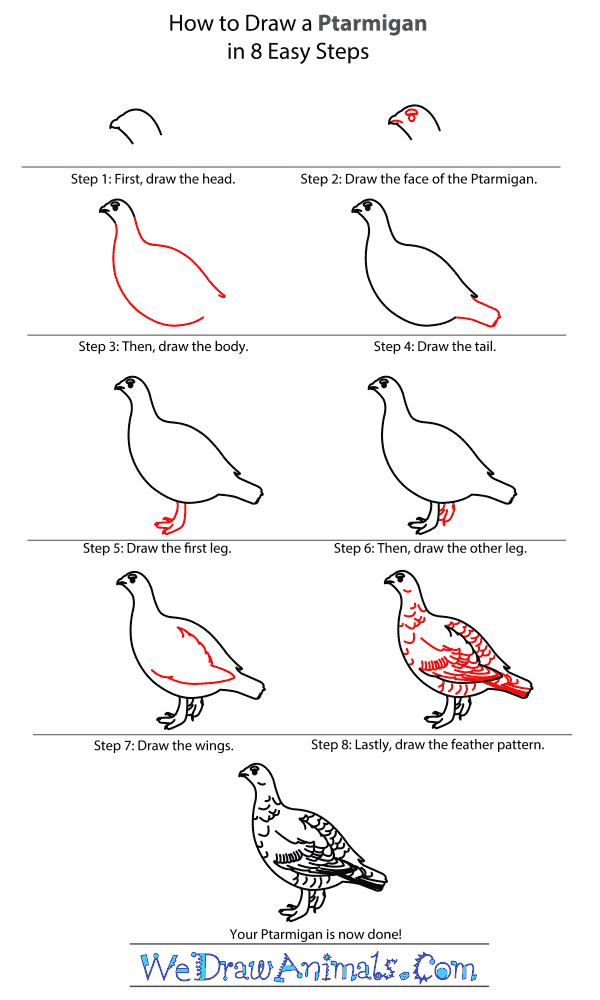 How to Draw a Ptarmigan - Step-By-Step Tutorial
