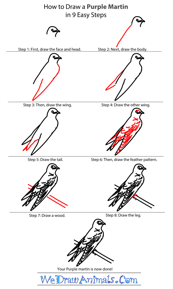 How to Draw a Purple Martin - Step-By-Step Tutorial
